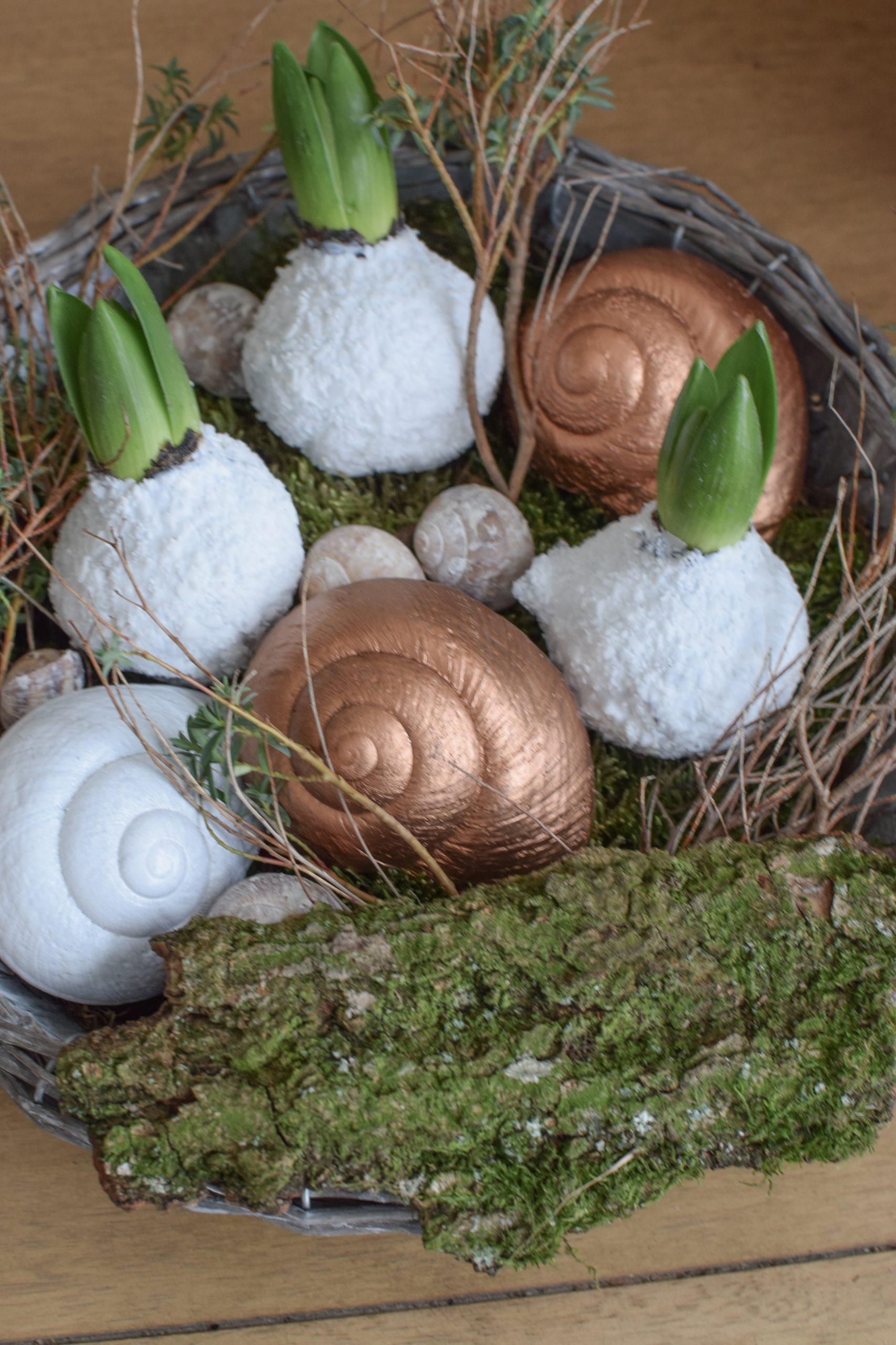 Hyazinthe weiß gewachst. Frühlingsblüher Frühlingsdeko mit Naturmaterialien-schnecke-lamarkiana