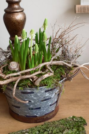 Muscari weiß Traubenhyazinthe Hyazinthe im Topf. Frühlingsblüher Frühlingsdeko mit Naturmaterialien Topfpflanze