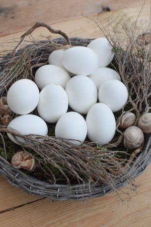 Hühnerei Osterei Ei Eier weiß ausgeblasen Osterdeko Ostern naürlich dekorieren