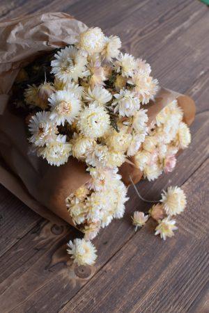 Strohblume weiß Vintage getrocknet Trockenblumen Deko Naturdeko Naturmaterialien Kreativsein