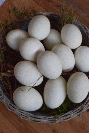 Truthahnei Osterei Ei Eier weiß ausgeblasen Osterdeko Ostern naürlich dekorieren