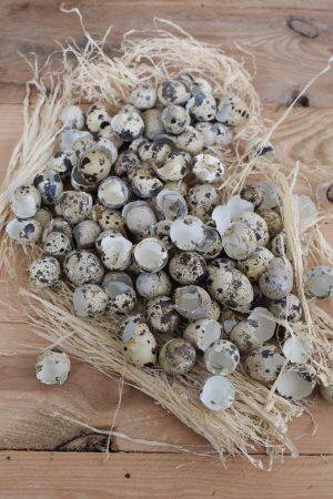 Wachteleier Schlupfschalen Osterdeko Ostereier Deko Dekoideen mit natürlichen Materialien Osterdeko