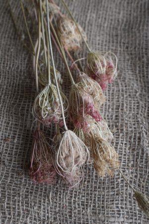 Trockenblumen: Fenchel getrocknet für deine Deko aus getrockneten Pflanzen