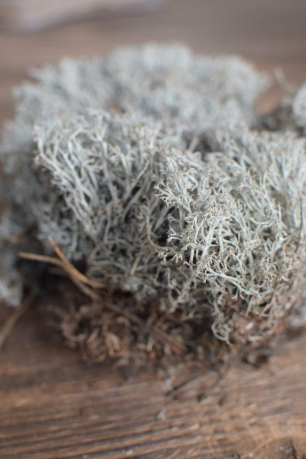 Silbermoos trocken getrocknetes Moos für deine Naturdeko Naturmaterial Moos Trocken Dekoidee DIY