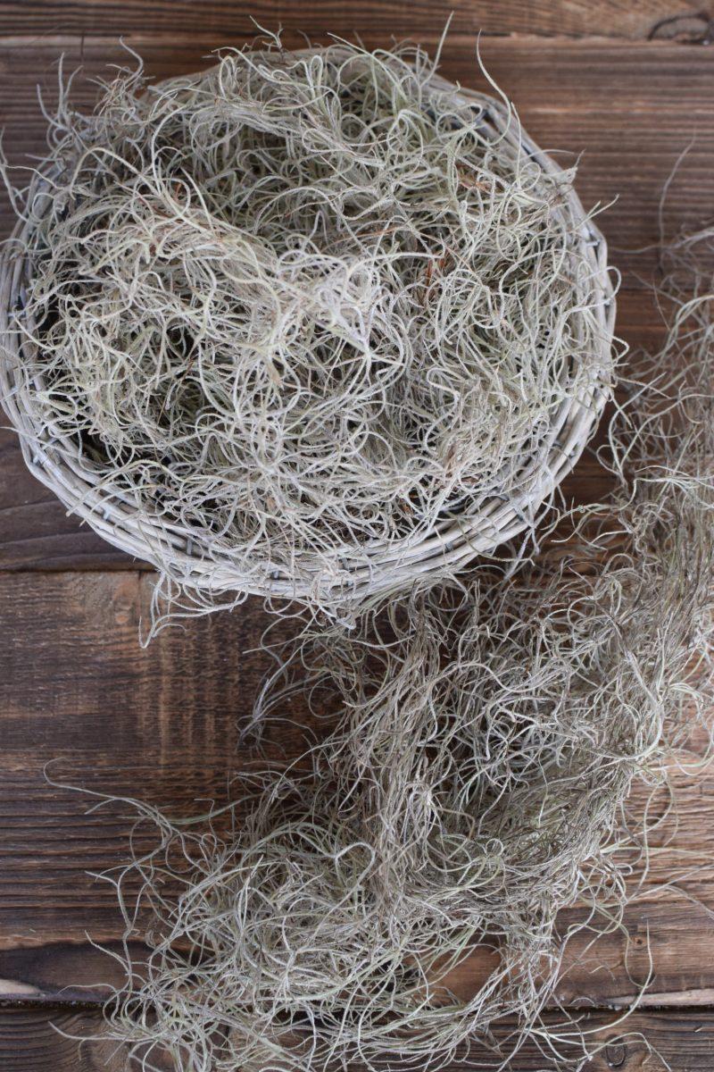 Tillandsien Curly Moos Naturdeko mit Naturmaterialien Dekoidee DIY Kreativsein