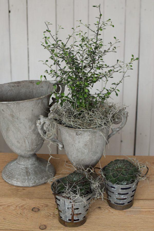 Amphore Pokal Pflanzgefäß Dekoidee Kelch Grünpflanze Tillandsien Sukkulenten