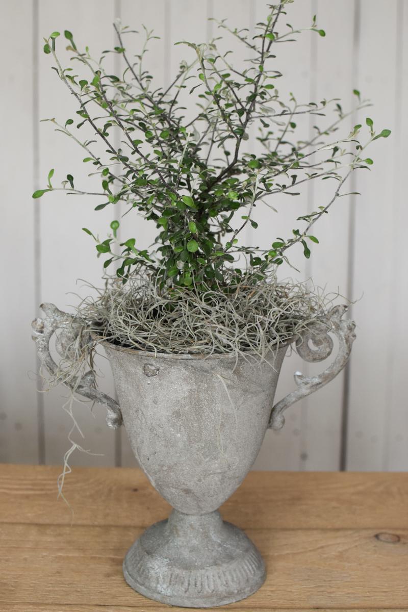 Amphore Pokal Pflanzgefäß Dekoidee Kelch Grünpflanze Tillandsien