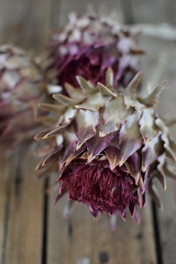 Artischocke rot. Perfekt für deine Naturdekos. Trockenblume Artischocken Kopf getrocknet