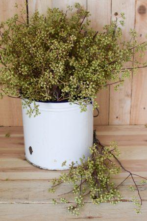 Eukalyptus Früchte frisch Greenery Fruchtstände Eucalyptus