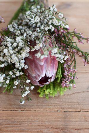 Protea die Trendblume. Proteen trocknen toll ein und können immer wieder dekoriert werden.