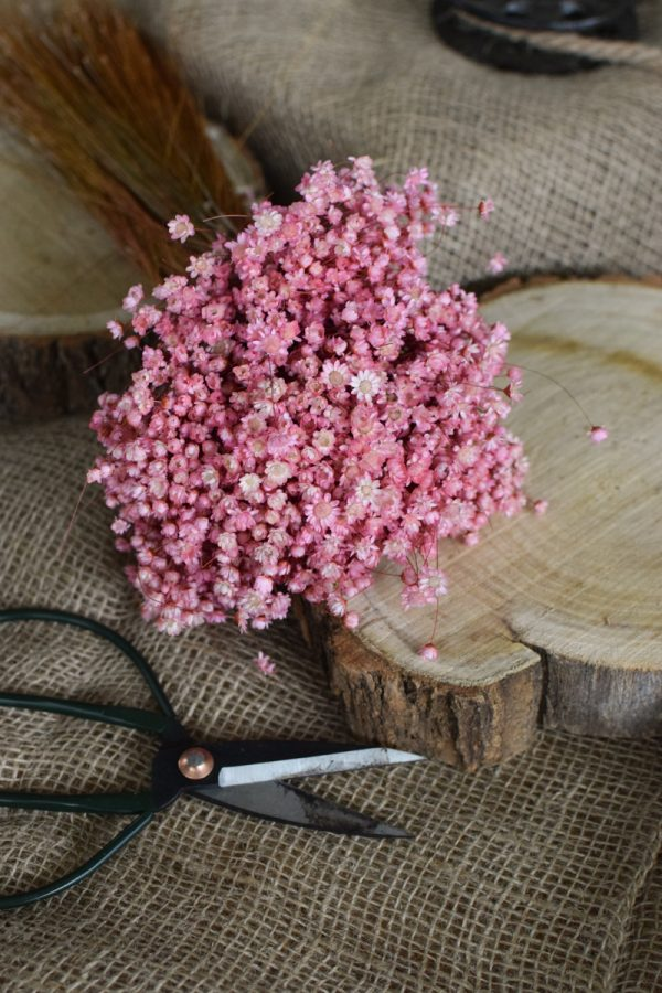 Glixia Trockenblume Strohblume Kreativsein und gestalten mit Trockenblumen Naturdeko Dekoidee