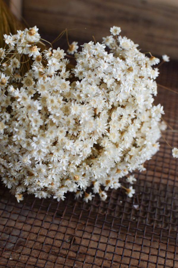 Glixia weiß Trockenblume Strohblume Kreativsein und gestalten mit Trockenblumen Naturdeko Dekoidee