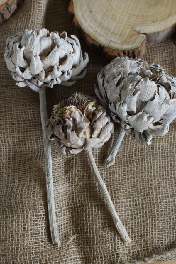 Artischocke getrocknet weiß Trockenblumen Artischocken trocken trocknen Naturdeko Deoidee