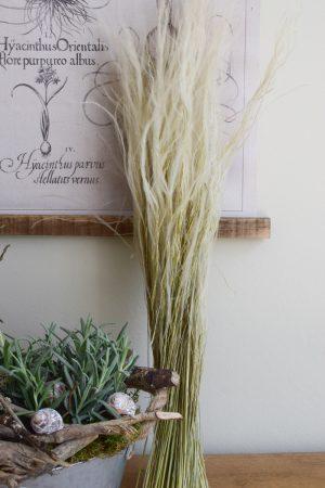 Trockenblume Federgras Stypa Pennata. Gras Gräser getrocknet Naturdeko mit Trockenblumen vom Mrs Greenery Shop