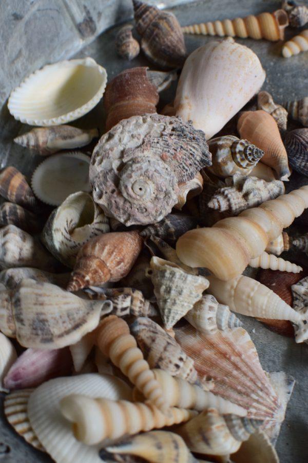 Muscheln Muschel-Mix für deine Sommerdeko. Maritime Deko mit Strand Flair. Tischdeko Sommer