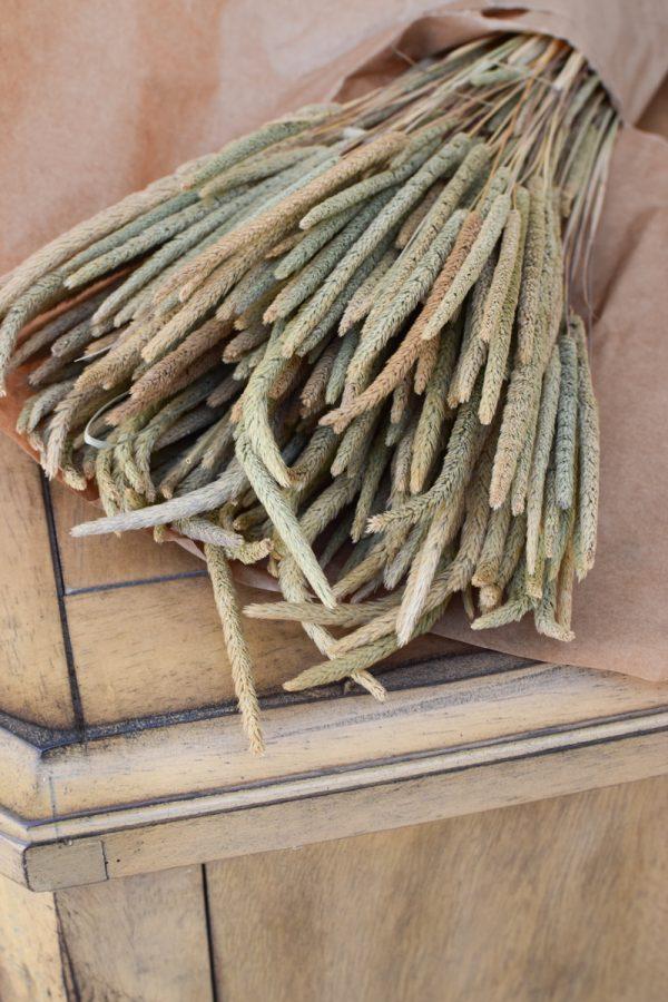 Trockenblume Phleum Lieschgras Lieschgräser. Gras Gräser getrocknet Naturdeko mit Trockenblumen vom Mrs Greenery Shop
