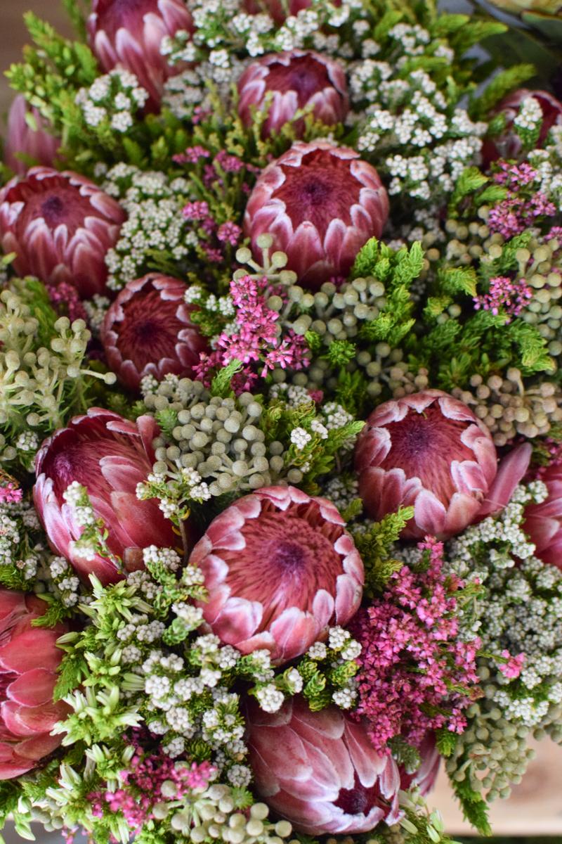 Protea die Trendblume. Proteen trocknen toll ein und können immer wieder dekoriert werden. Bouquet Arrangement STrauss