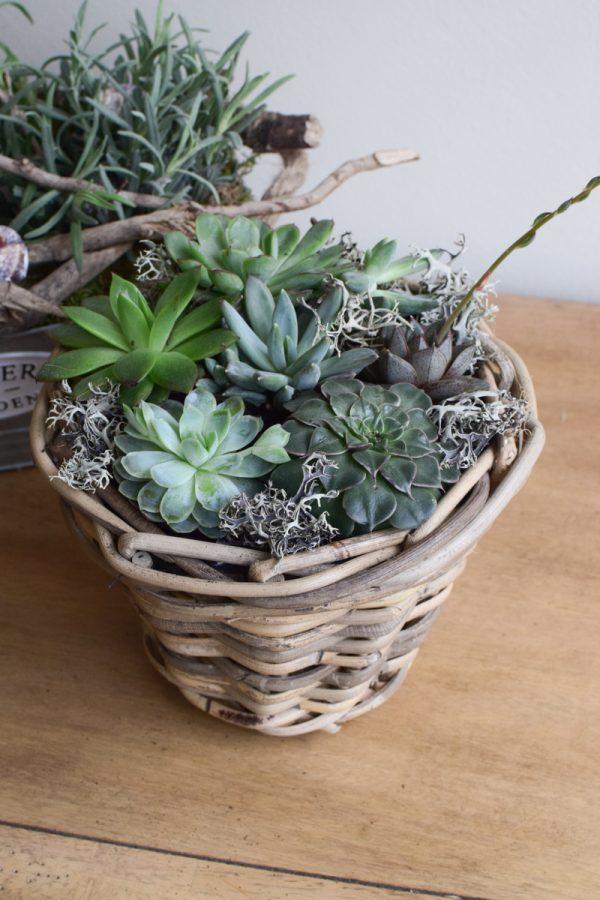 Topf aus Rattan. Übertopf mit Folie. Wasserdicht für deine Pflanzen outdoor und indoor. Natürlich dekorieren mit Mrs Greenery Produkten