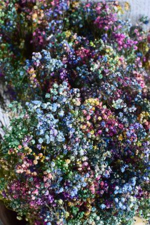 Schleierkraut bunt. Getrocknetes Schleierkraut für deine Naturdeko Trockenblumen bunt.