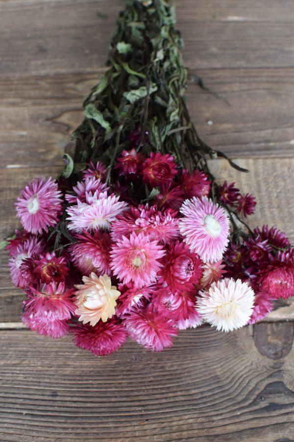 Strohblume Rodanthe Pink Rosa Trockenblumen zum Kreativsein getrocknete Blüten Trend