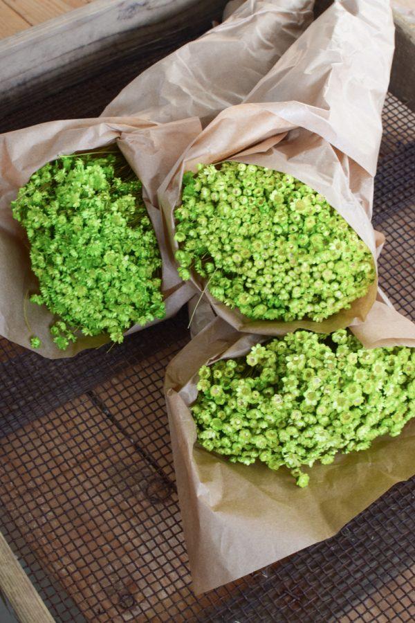 Glixia apfelgrün grün Trockenblume Strohblume Kreativsein und gestalten mit Trockenblumen Naturdeko Dekoidee
