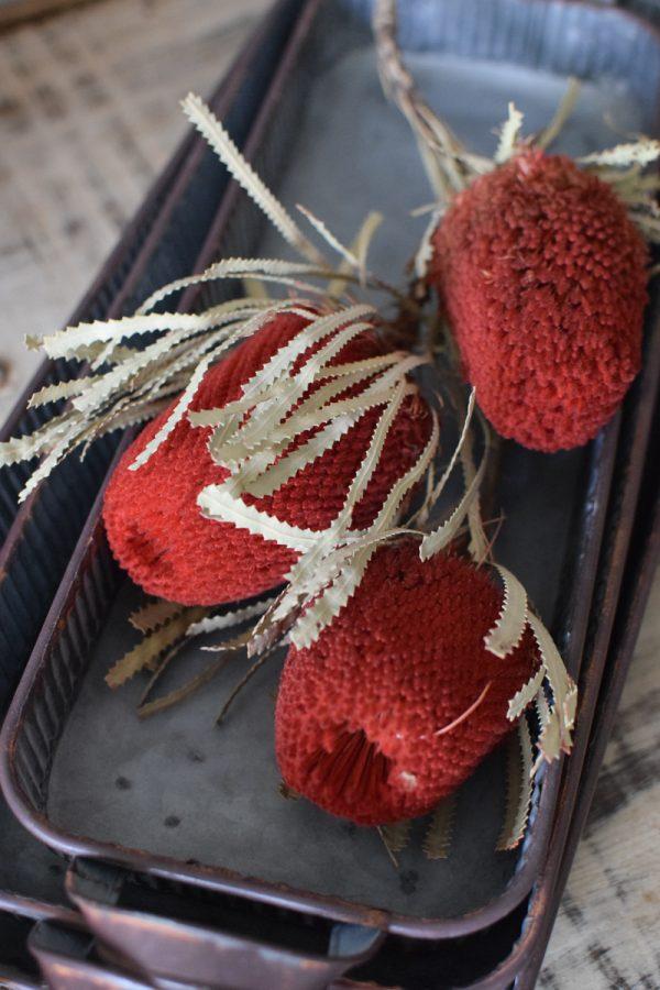 Banksia rot getrocknet Trockenblumen Naturdeko Deko aus dem Mrs Greenery Shop