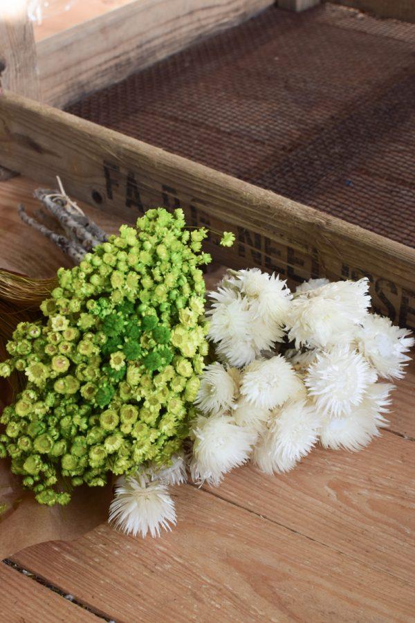Capblume Trockenblume Stroßblume weiss getrocknet Naturdeko Glixia apfelgrün