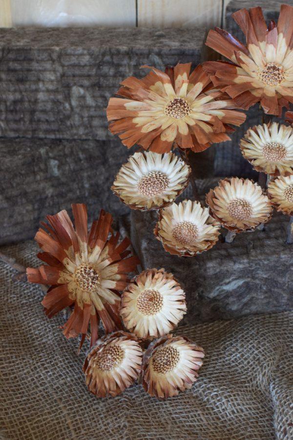 Holzblume natur, Blüte getrocknet. Mit Trockenblumen kreativsein aus dem Mrs Greenery Shop