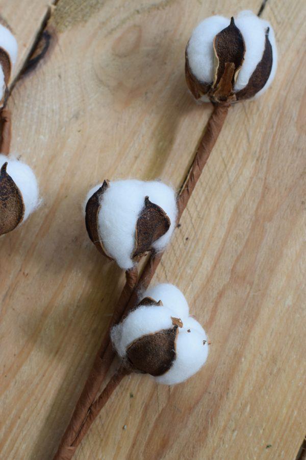 Baumwolle fixiert. Trockenblumen getrocknet vom Mrs Greenery Shop