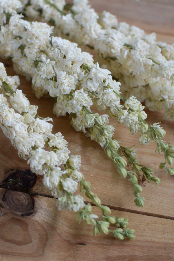 Rittersporn weiß Delphinium getrocknet im Bund Trockenblumen Kranz Kränze Kranzbinden