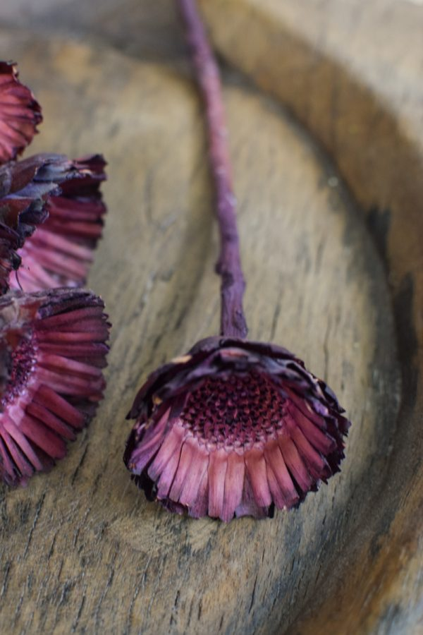 Holzblume violett. Blüte getrocknet. Mit Trockenblumen kreativsein aus dem Mrs Greenery Shop