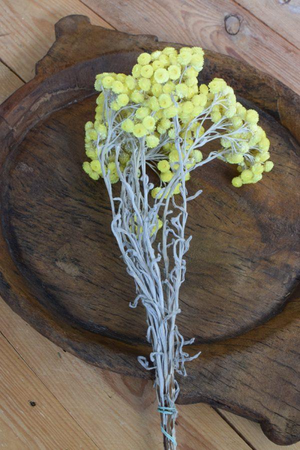 Immortelle Trockenblume im Bund zitrusgelb. Kreativsein mit getrockneten Blumen aus dem Mrs Greenery Shop