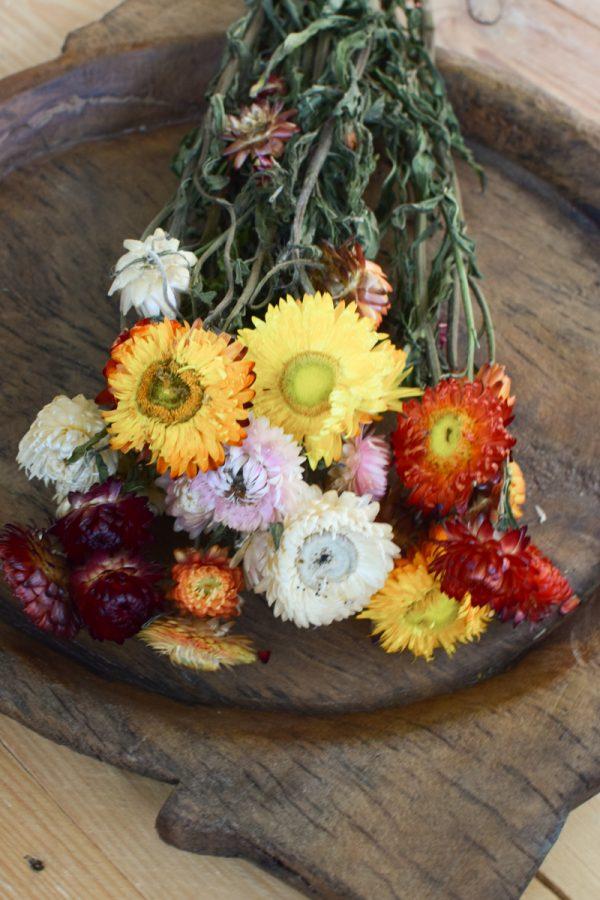 Strohblume Rhodante Trockenblume Blüten getrocknet zum Kreativsein Basteln vom Mrs Greenery Shop