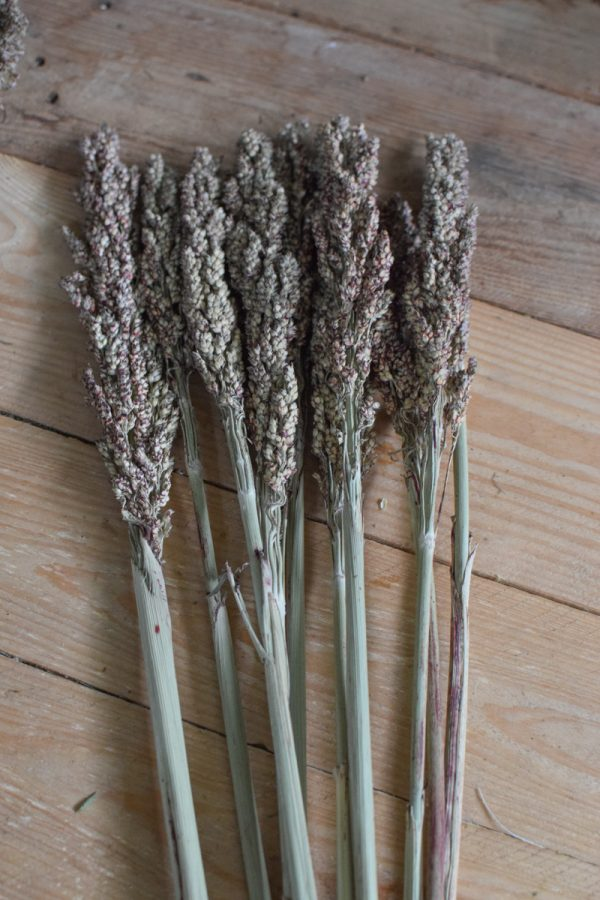 Hirse Sorghum Getrocknet Trockenblumen aus dem Mrs Greenery Shop Getreide