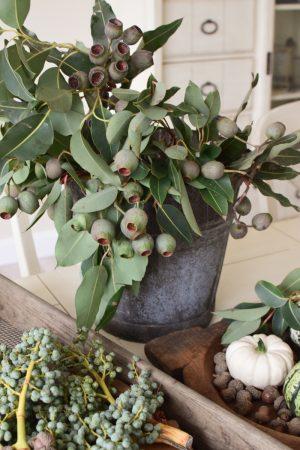 Eukalyptus Zweig mit Fruechten. Eukalyptus Kapseln frisch Naturdeko Dekoidee mit Mrs Greeenery Shop