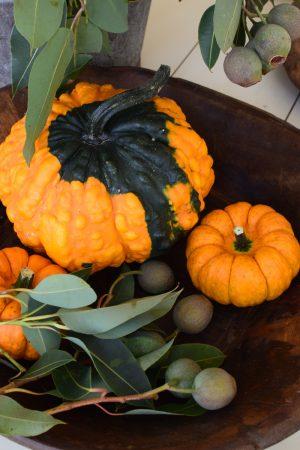 Herbstdeko mit orangen Kürbissen. Der Klassiker der Herbstdeko. Jetzt bestellen! Kürbis