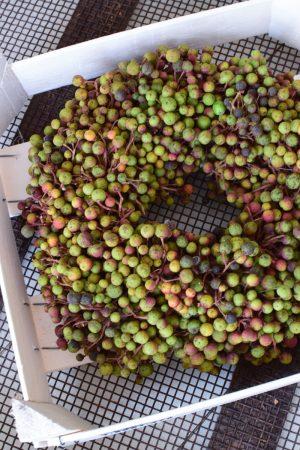 Getrockneter Beerenkranz mit bunten Beeren. Herbstkranz Fertigkranz perfkt zum Dekorieren 30 cm Durchmesser Herbstdeko Kränze Kranz fertig gebunden bestellen im Mrs Greenery Shop