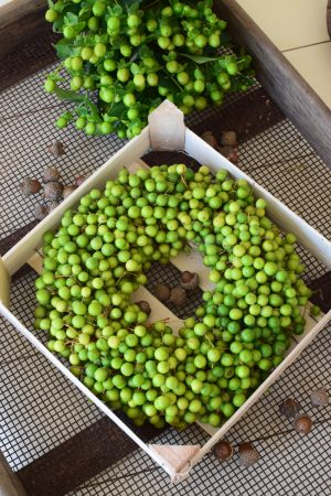 Frischer Beerenkranz mit grünen Beeren. Herbstkranz Fertigkranz perfkt zum Dekorieren 30 cm Durchmesser Herbstdeko Kränze Kranz fertig gebunden bestellen im Mrs Greenery Shop