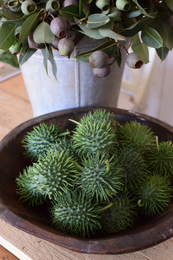 Cucumis dekorieren. Ziergurke als Herbstdeko- Dekoidee Deko herbstlich vom Mrs Greenery Shop Naturdeko
