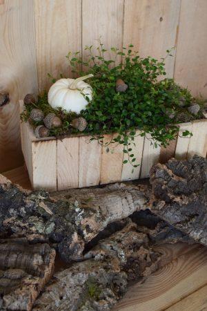 Holzkiste natur mit Plastikeinsatz für deine Naturdeko-Ideen. Deko Dekoration Kiste im Mrs Greenery Shop bestellen