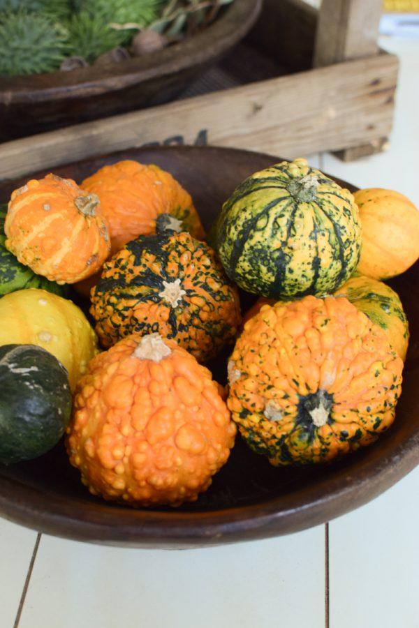 Herbstdeko mit Kürbissen. Der Klassiker der Herbstdeko. Jetzt bestellen! Kürbis Mix vom Mrs Greenery Shop