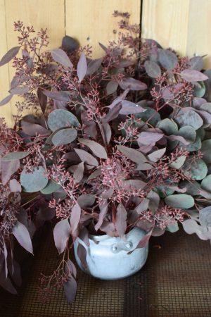 Eukalyptus Eucalyptus Populus rot mit Früchten frisch jetzt im Mrs Greenery Shop bestellen