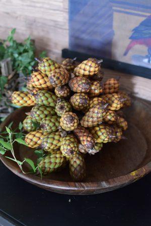 Raphia Palmenfrucht Zapfen Dekozapfen exotisch zapfendeko Trockenblumen Fruchtstand im Mrs Greenery Shop bestellen